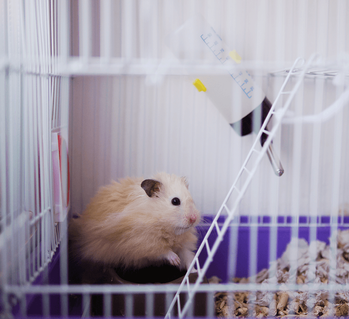 Pets in Condos: Know the Rules Before You Buy Hamster Image