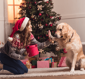 Pet Photos with Santa in Edmonton High Five with Dog Image