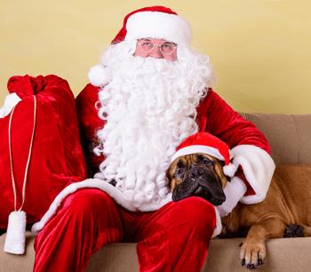 Pet Photos with Santa in Edmonton Santa and Dog Image